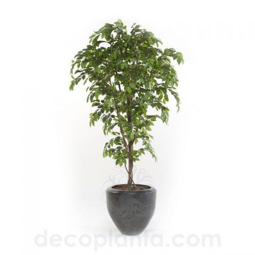 árbol FICUS PREMIUM artificial