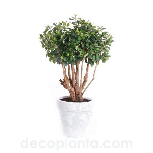 árbol FICUS BOTANIC artificial