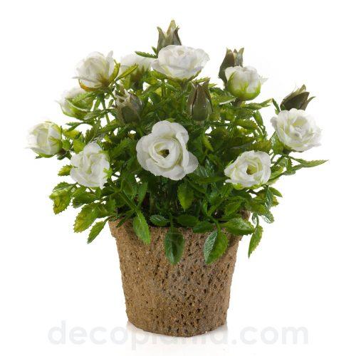 Centro de Rosas blancas mini, de 13 cm de altura total. Maceta de papel de 7 cm
