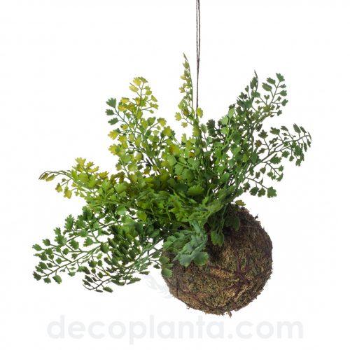 Planta Colgante de techo ADIANTUM sobre bola de musgo de 10 cm de diámetro.