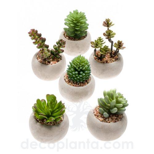 Plantas SUCULENTAS en maceta de cemento redonda. 6 Modelos diferentes con Increíble realismo