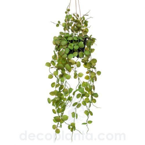 Planta Colgante de techo artificial CEROPEGIA para Techo, de 50 cm de largo en maceta negra
