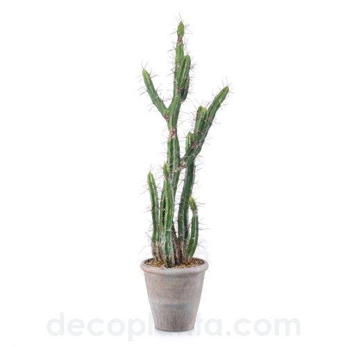 Cactus STETSONIA artificial de alto realismo para interior