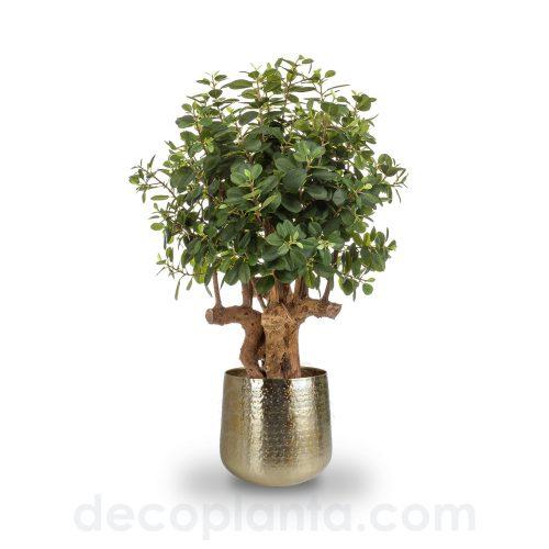 árbol FICUS BOTANIC artificial de 100 cm de alto