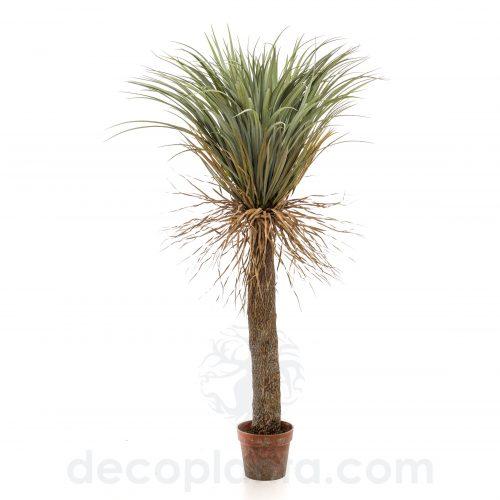 Árbol YUCCA ELEGANT SALVAJE de 150 cm con tronco revestido de gran volumen
