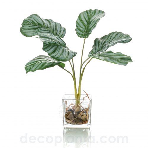 Planta CALATEA artificial de 35 cm de alto incluyendo jardinera de cristal de 8 cm