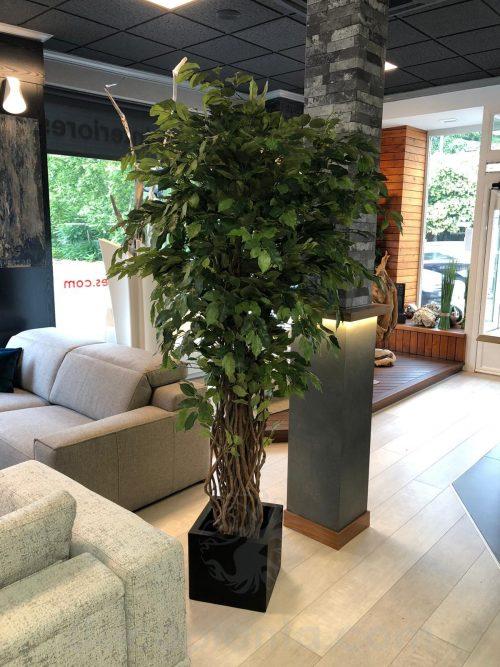 árbol ficus deluxe decorando interiores