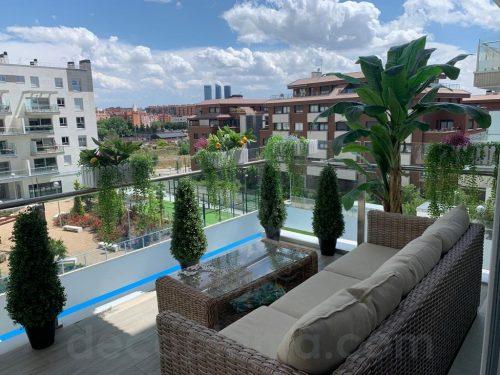 árbol boj cono y platanero en terraza
