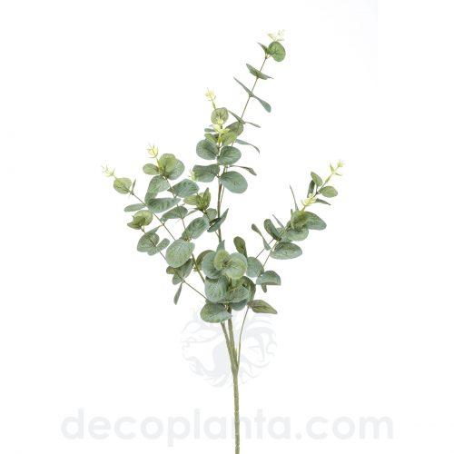 Arbusto de Eucalipto de 75 cm de altura