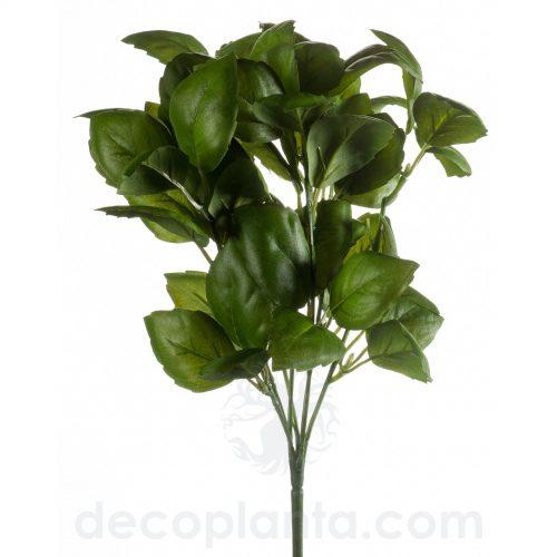 Planta de Albahaca de 28 cm de altura