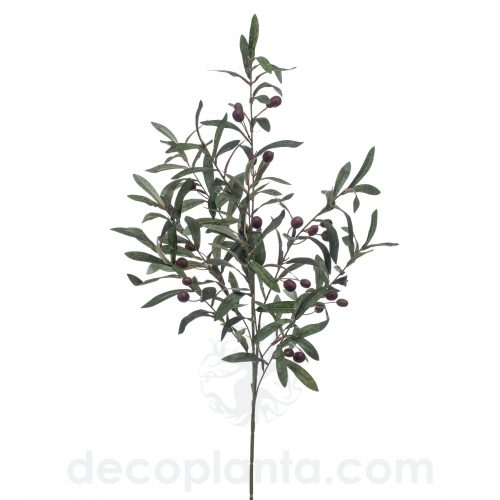 Arbusto de Olivo de 100 cm de altura