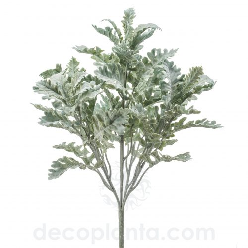 Arbusto de Cineraria de 42 cm de altura